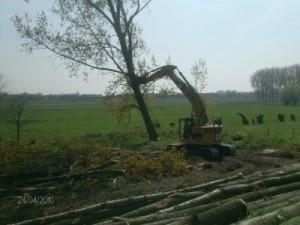 Rooien populieren in overstromingsgebied - Berlare